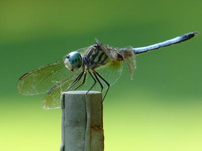 Love Dragonflys...in my garden
