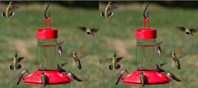2 Dr. JB's Hummingbird Feeders