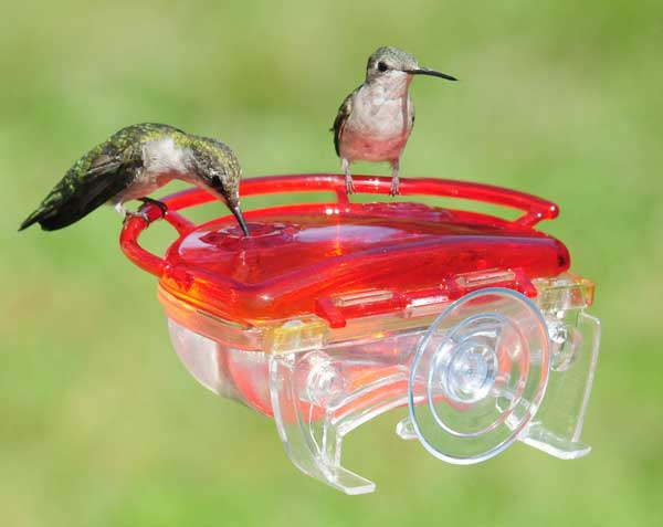 Gem 4 oz. Window Hummingbird Feeder