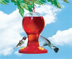 Basic Hummingbird Feeder without a perch