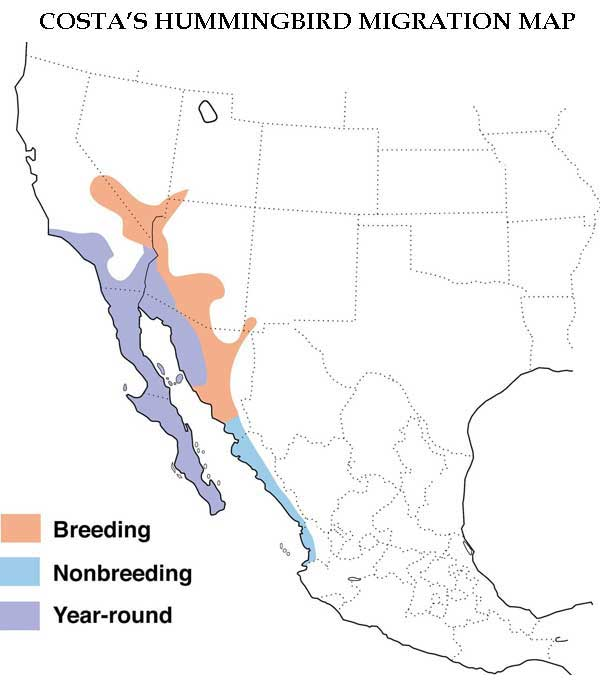 Costa's Hummingbird Migration Map