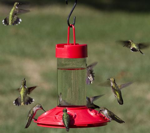 Basic Hummingbird Feeder