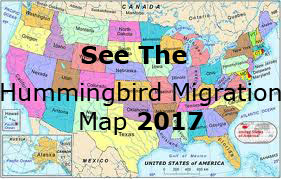 Hummingbird Migration Spring 2017 Migration Sightings And Map For Spring 2017