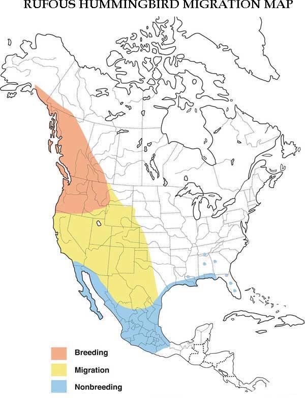Rufous Hummingbird Migration Map