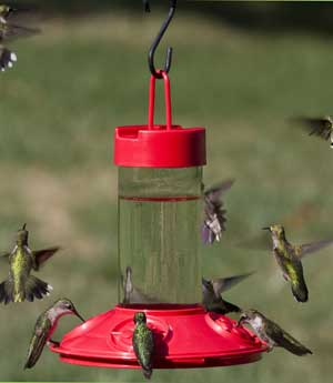 Dr. JB's Red Hummingbird Feeder