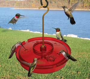 The Hummingbird Haven Tray Feeder
