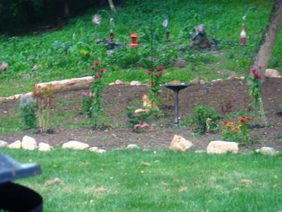 My Hummingbird Garden